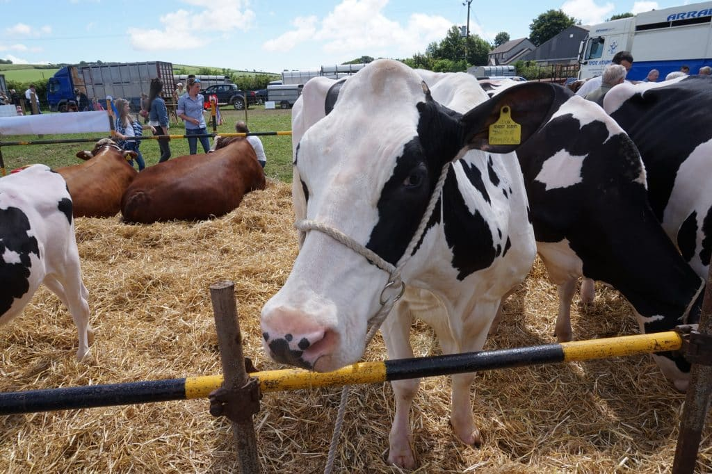Ulverston and North Lonsdale Show