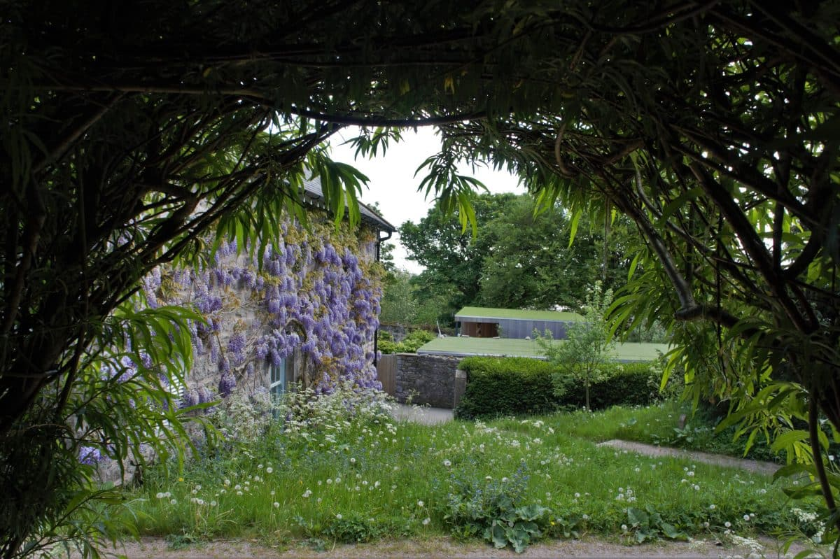 Wisteria at Ford Park Ulverston